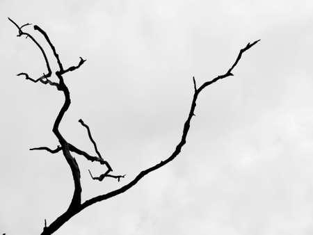 haunt: Silhouette dry tree