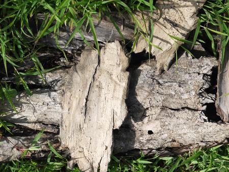 cortical: tree bark on green grass in a garden