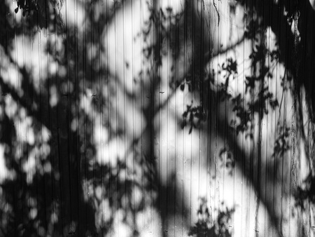 nearness: Black and white tree shadow on the wall Stock Photo