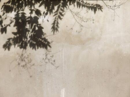 tree shadow: tree shadow on cement wall Stock Photo