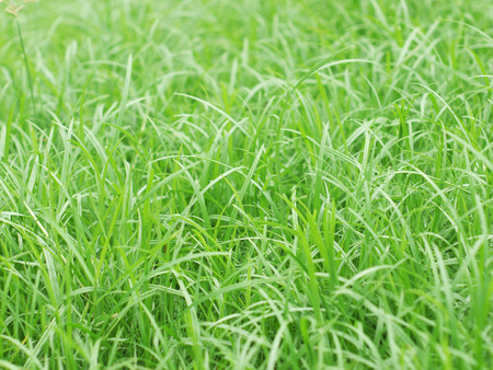 thick growth: grass closeup