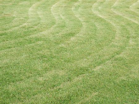 big: big lawn
