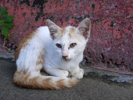 Cute kitten in concrete setting. Town cat. Maybe stray. Stock Photo