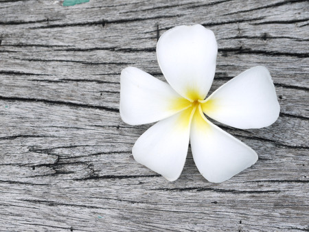 tahitian: Close up of plumeria or frangipanni blossom on the old wood background