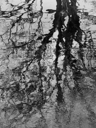 quivering: Aquatic abstract in autumn: Distorted reflection of bare trees on surface of stream, in black and white
