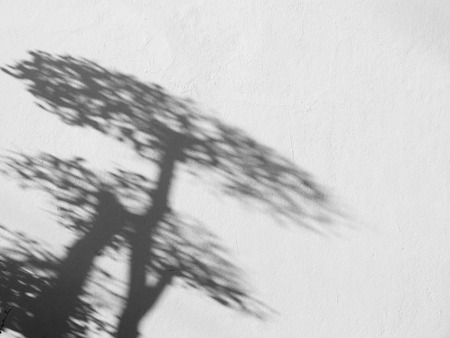 nearness: shadow tree on white wall Stock Photo