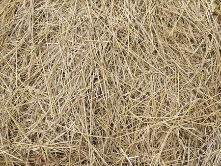 rick: hay dry straw background