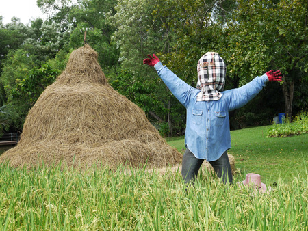 Scarecrows in the rice farm Stock Photo