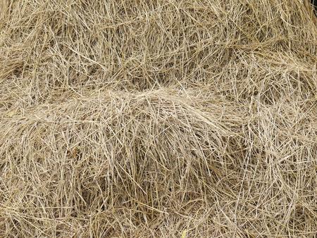 hayrick: hay dry straw background