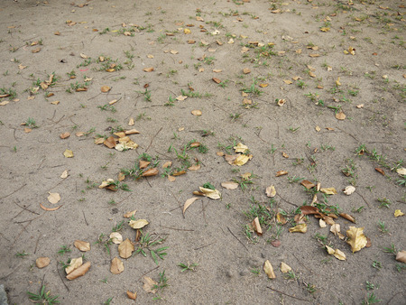 pile of leaves: Pile of dry leaves on the ground Stock Photo