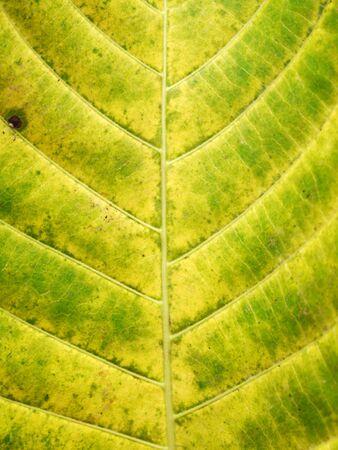 grunge leaf: grunge leaf texture Stock Photo