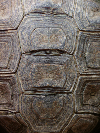 marking up: Texture of Turtle carapace Stock Photo
