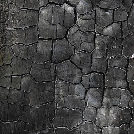 burnt wood: background of burnt wood texture