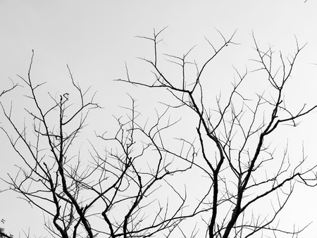 distort: Branch of dead tree
