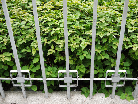 periodical: The fence of the shrubs and picket, seamless, horizontal