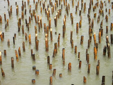 intercept: Old bamboo fence protect sandbank from sea wave