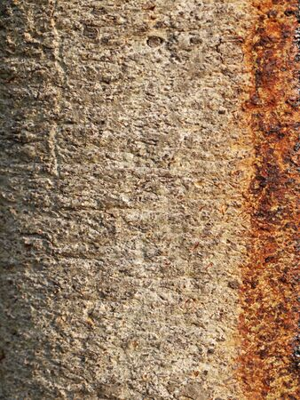 bark texture: bark texture Stock Photo