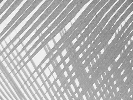 nearness: Palm leaf shadows on a white wall Stock Photo