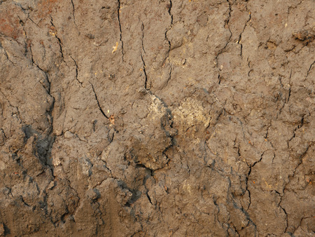 mud pit: Mud texture: wet cracked ground Stock Photo