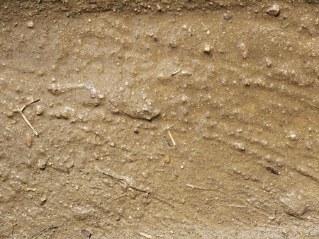roughing: Mud texture or wet brown soil as natural organic clay and geological sediment mixture as in roughing it in a dirty muddy country road bog after the rain or rainy season found in a damp moist climate