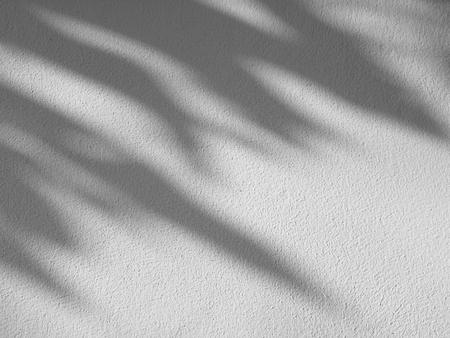 Schatten der Blätter auf einer weißen Wand Lizenzfreie Bilder