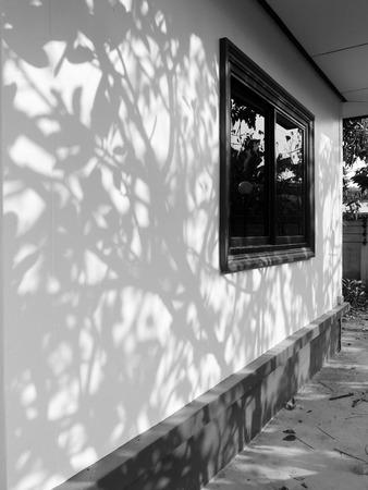 nearness: tree shadow on wall home Stock Photo