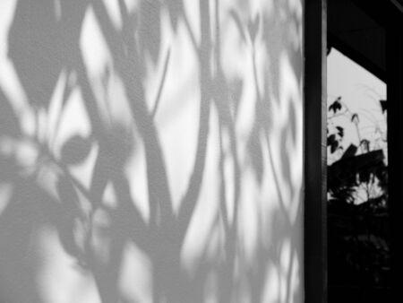 tree shadow: tree shadow on wall home Stock Photo