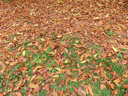 pile of leaves: Pile of dry leaves on the grass