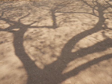 tree shadow: red dirt floor with tree shadow