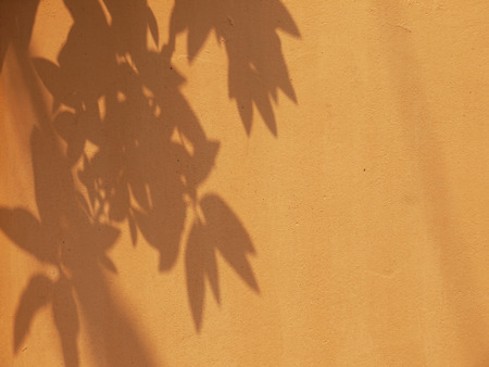 nearness: brown wall with leaf shadow Stock Photo