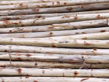 pile of logs: Eucalyptus tree, Pile of wood logs ready for industry