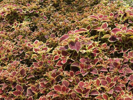 Ornamental plants in red pots Stock Photo