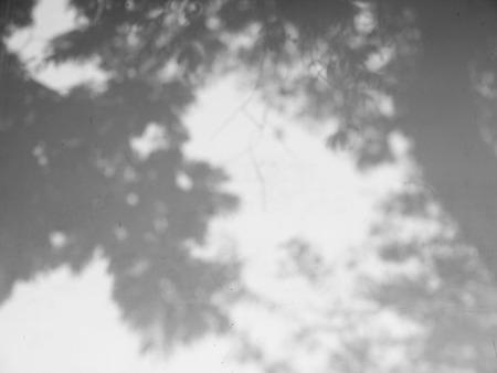 白い壁に葉の木の影