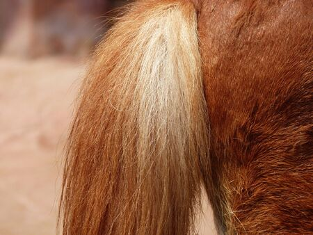 rear end: tail of a horse