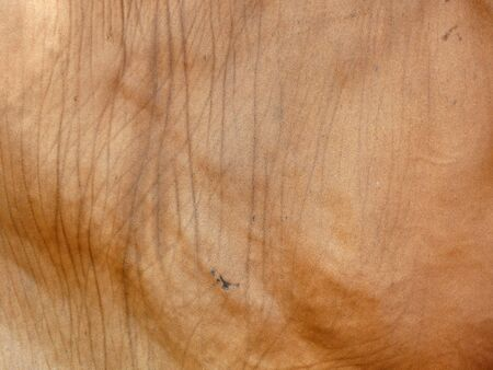 red skinned: cow skin texture