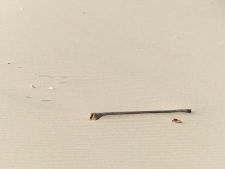 twig: Twig on sand