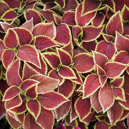 Ornamental plants in red pots
