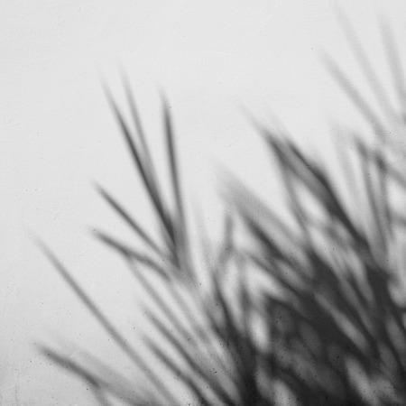 shadow of bamboo leaf on white background Standard-Bild