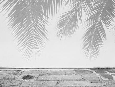 흰 벽에 팜 리프 그림자