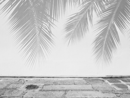 Palm leaf shadows on a white wall Imagens