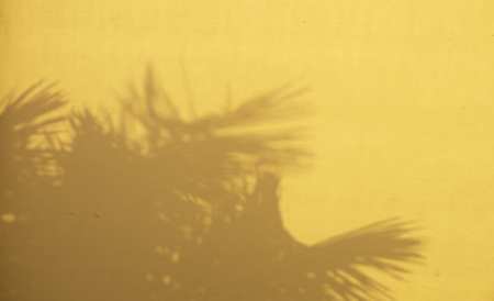 wall light: shadow of palm leaf on yellow canvas Stock Photo