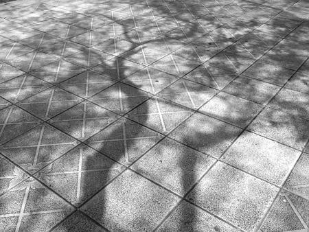 tree shadow: tree shadow on floor