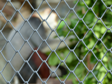 wire mesh steel