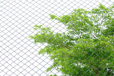 mesh: Decorative wire mesh Stock Photo