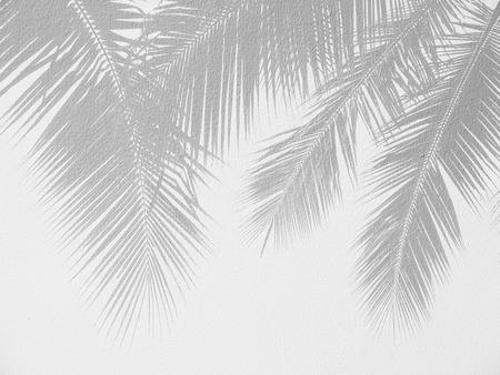 Palm leaf shadows on a white wall Stockfoto