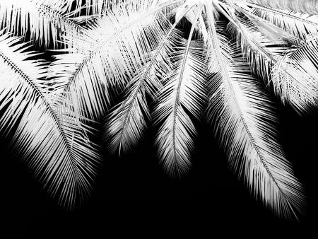 palmtree: black and white palm leaf