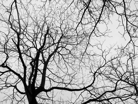 haunt: dry tree silhouette