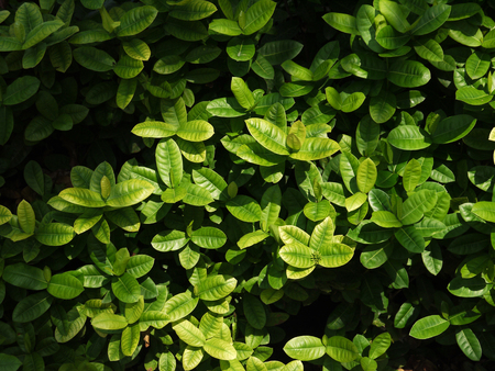 encroach: leaf and bush plant