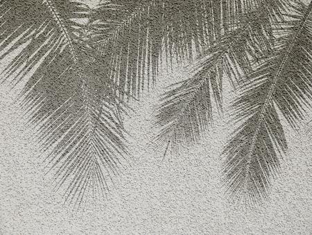palm: Palm leaf shadows on cement wall