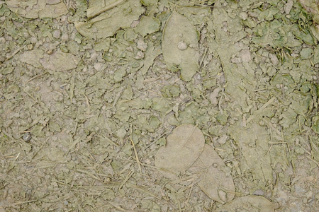 morass: Mud texture or wet brown soil as natural organic clay